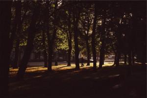 city-park-forest-nature-4052